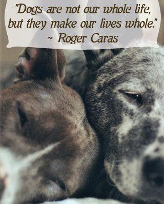 Animal Cruelty Quotes Alluring Animal Banner Quotes
