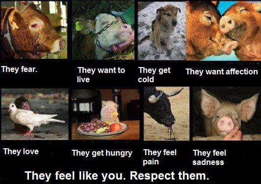 Animal Abuse Quotes Gorgeous Animal Banner Quotes