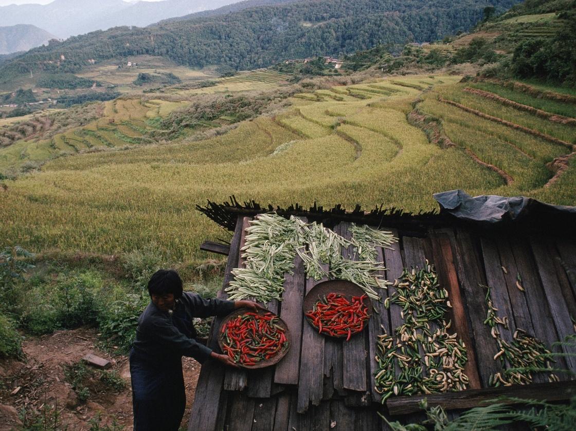 summary of harvest by loreto paras sulit