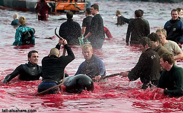 Faroe Islands Gifted